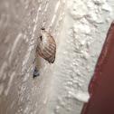 Unknown Spotting ( One Snail )