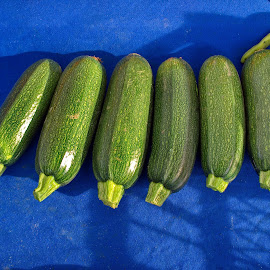 Fresh zucchini on the street market shelf by Ciddi Biri - Food & Drink Fruits & Vegetables ( digestive system, lunch, healthy life, yellow, vegetable, summer, agriculture, agricultural, market stall, healthy food, digestion, vegetarian, farm, ripe, cooking, diet, organic, shopping, harvest, green, ingredient, natural, nature, cuisine, raw, dinner, food, street market, nutrition, closeup, background, healthy, plant, digestive health, fresh )
