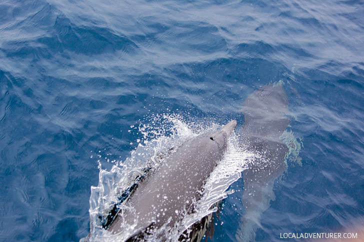 Common Dolphins - San Diego Whale Watching Tour.