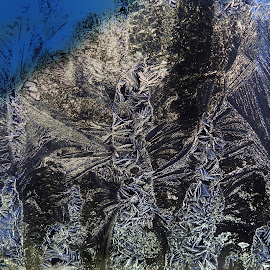 Frost Patterns by Patricia Phillips - Abstract Patterns ( alaska frost winter patterns windshield )