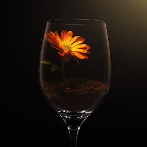 Flower ll.jpg