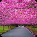 Spring Scenery Wallpaper icon