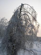 Photo: поломанных деревьев чуть ли не больше, чем не пострадавших