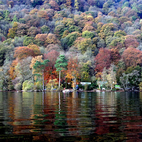 by Graham Sivills FBCS - Nature Up Close Trees & Bushes ( english lake district, autumn, windermere, lake, lake district,  )