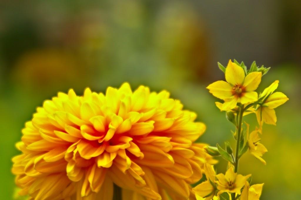 Een voorbeeld van twee bloemen scherp in beeld door Focus stacking
