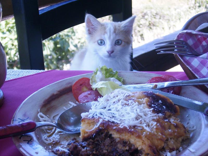 Un gatto piovuto a tavola di neurone