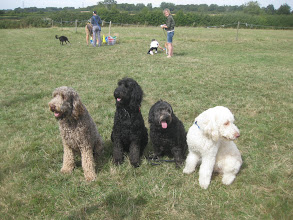 Photo: Brian, Ralph, Tilly and Alan Labradoodle