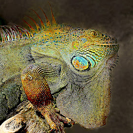 Dragon by Gérard CHATENET - Digital Art Animals