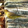 Nonresident Birds in the Parks of Florida's Gulf Coast