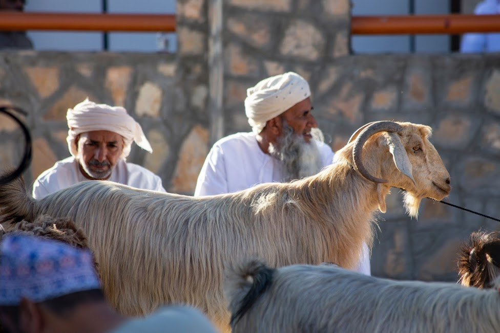 kozi targ w Nizwie, Nizwa, Oman