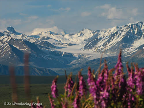 Alaska Itinerary 7 Days Road Trip From Mount Denali To Kenai Fjords Ze Wandering Frogs