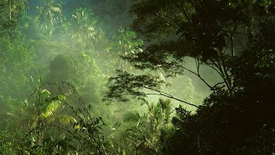 Photo: near Ubud, Bali, Indonesia --- Tropical Rainforest on Bali --- Image by © Remi Benali/Corbis