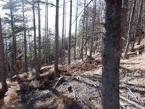 下山は林道歩きで