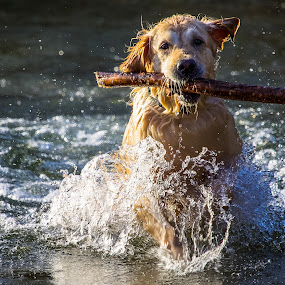 wet by Christoph Reiter - Animals - Dogs Playing