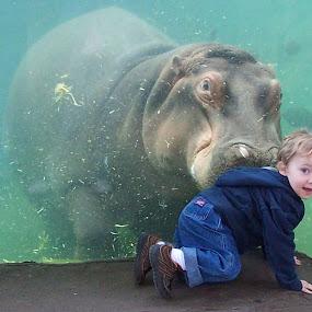 Zoo Fun by Shannon Maltbie-Davis - Babies & Children Toddlers ( water, hippo, zoo, toddler, boy,  )
