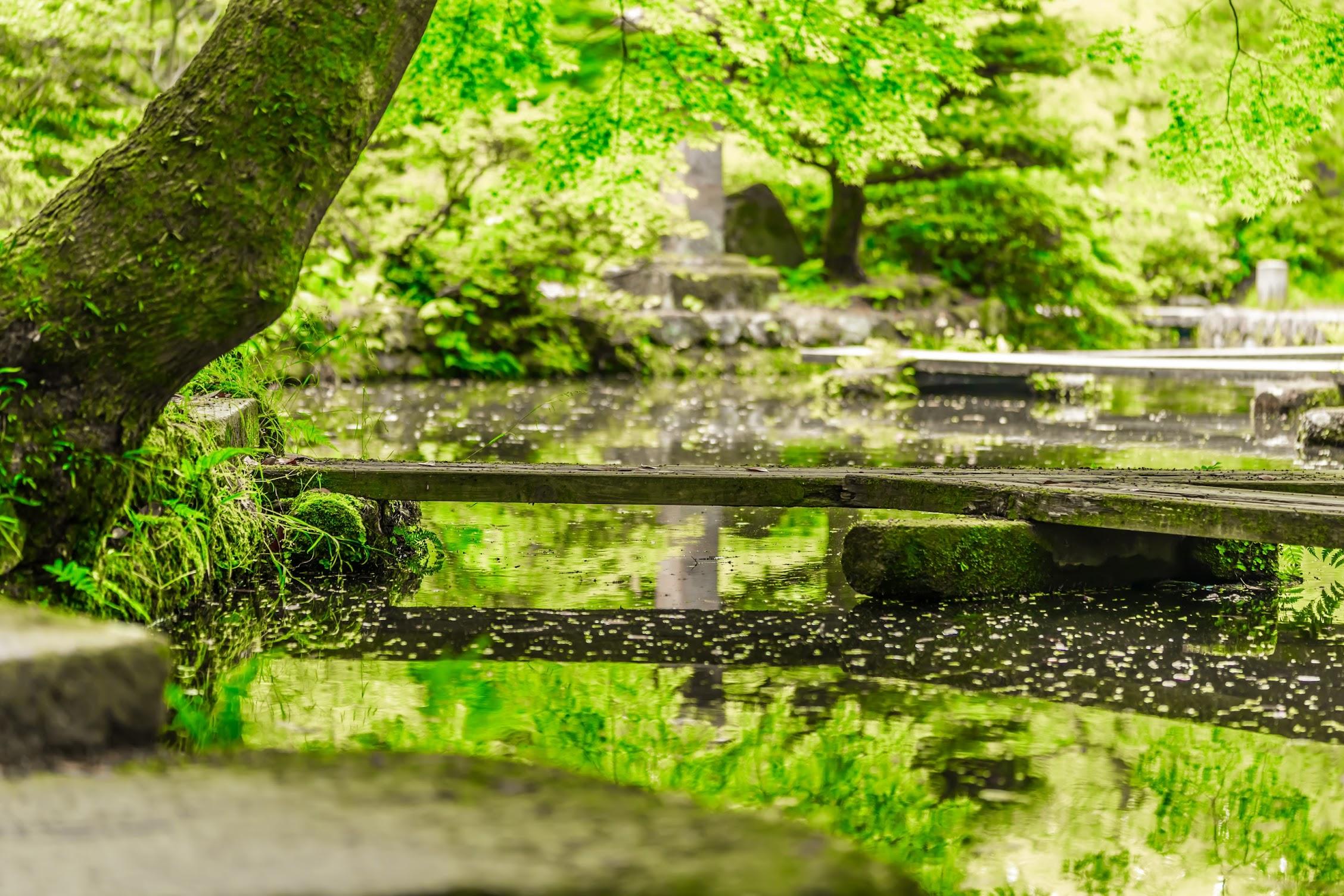 金沢 尾山神社 神苑4