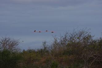 Photo: Flamingo flight animation