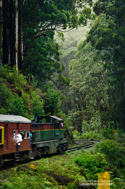 Ella to Colombo Train Forest