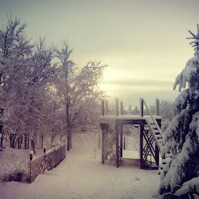 Winter in my yard by Nat Bolfan-Stosic - Uncategorized All Uncategorized ( calm, winter, dream, snow, backyard )