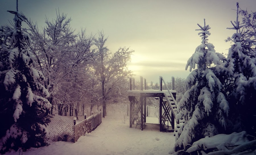 Winter in my yard by Nat Bolfan-Stosic - Uncategorized All Uncategorized ( calm, winter, dream, snow, backyard )