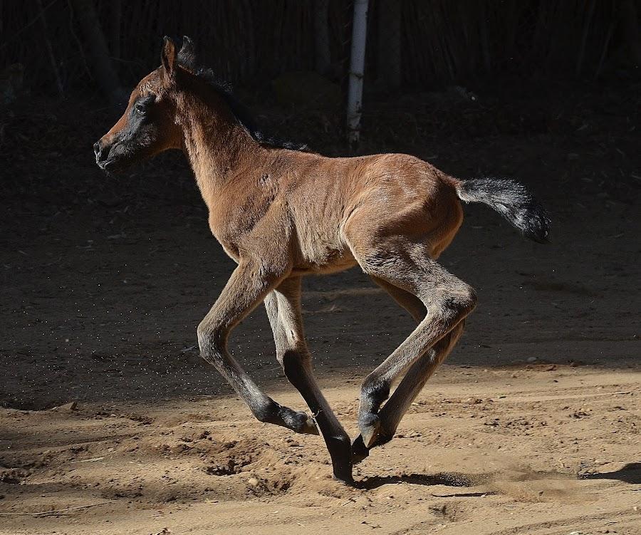 by Yasmin Kader - Animals Horses