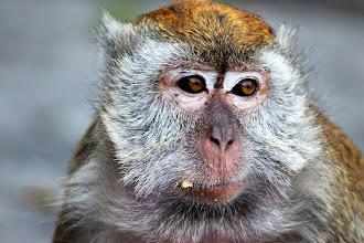 Photo: Monkey :)