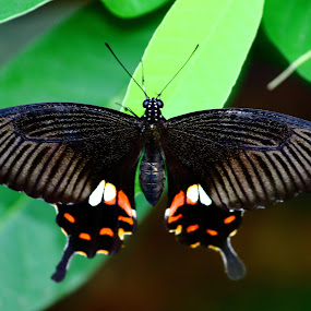 by Sudipta Ghosh - Animals Insects & Spiders