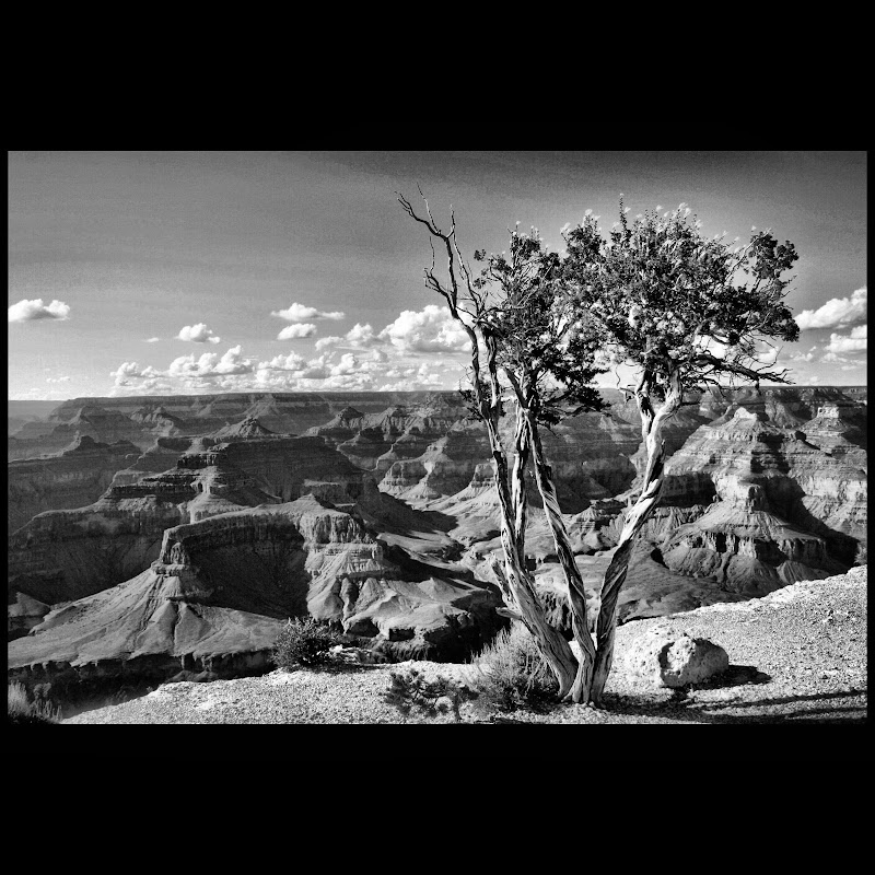 Grand Canyon in Black and White  di Ricky1999