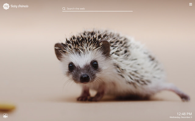 My Baby Animals Hd Wallpapers New Tab Theme Chrome Web Store