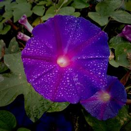 by Ashwathi Madhavan - Flowers Flower Gardens (  )
