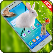 Rabbits in Phone | prank app