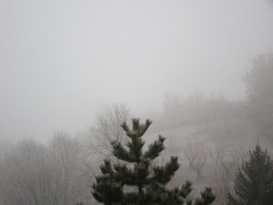 Trasparenze nella nebbia di *@ndrè*