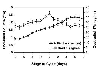 Concentración media (+eem) de estradiol-17β (triángulo) en relación con el diámetro folicular (cuadrado) en camellos no gestantes.