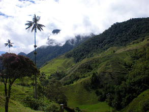 Photo: Wax palms can reach almost 200 feet in height!
