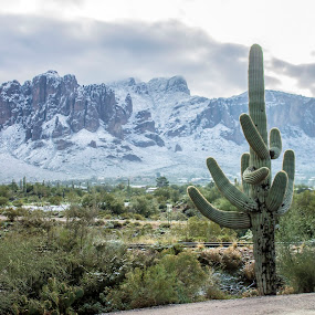 Superstitions Mountain  by David Shearer - Landscapes Deserts (  )