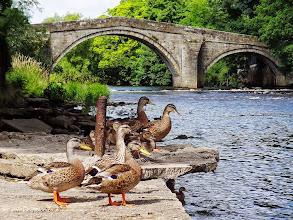 Photo: Ilkley Ducks