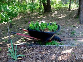 Photo: Re-purposed Wheelbarrow