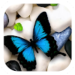 Butterfly on Stones Theme APK