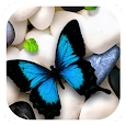 Butterfly on Stones Theme icon