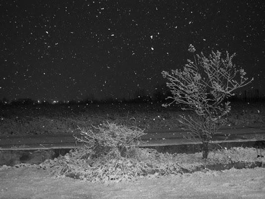 Nevicata notturna di asaasa