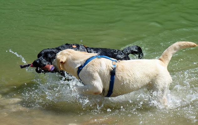 Giochi d'acqua di StePh