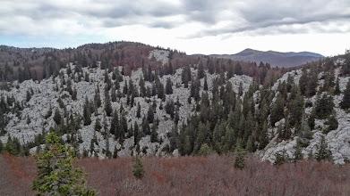 Photo: mixed terrain