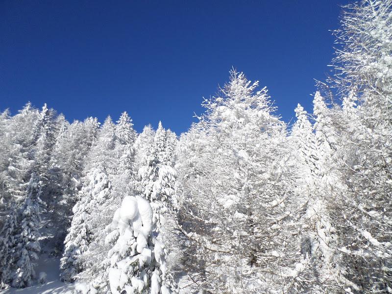 nel bosco bianco di laura62
