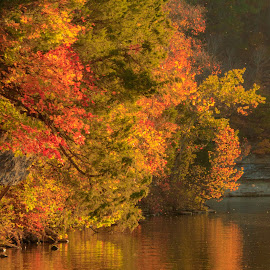 AUTUMN REFLECTIONS by Jennifer  Loper  - Landscapes Waterscapes ( leaves, reflections, autumn, trees, water, lake )