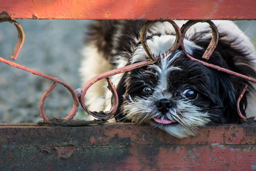 What's on the Outside by Ram Domaoal - Animals - Dogs Portraits ( dogs, pet, puppy, bestfriend,  )