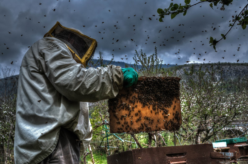 il signore delle api di Moreno re