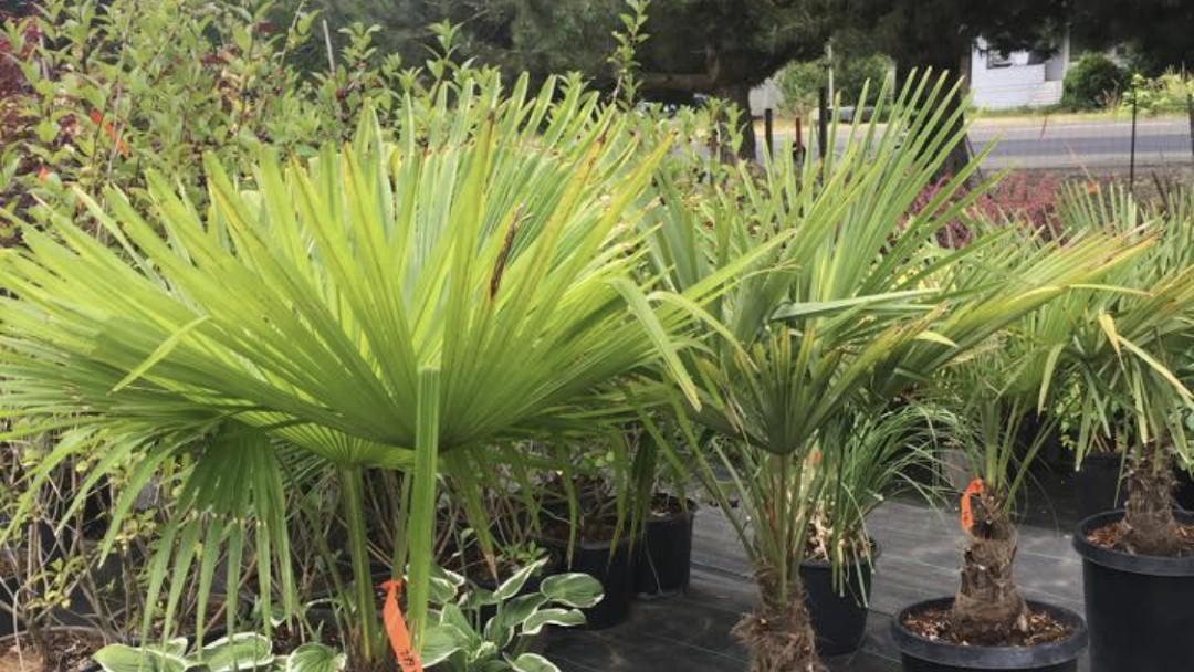 Lopez Nursery Garden Plant