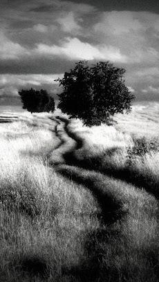Dramatic Black & Whiteのおすすめ画像2
