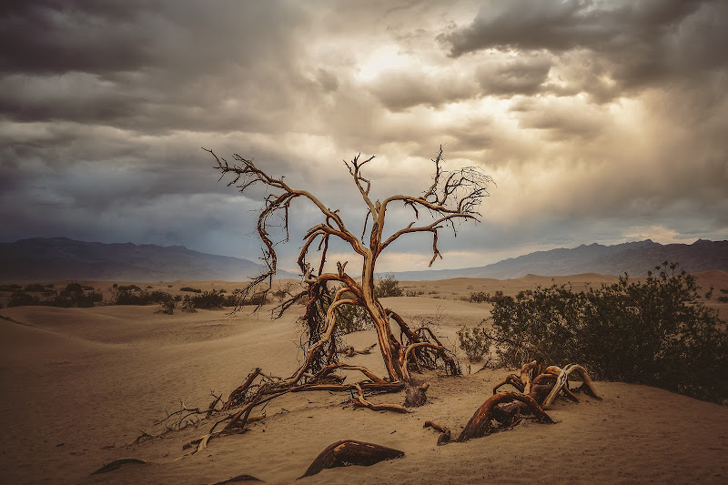 Una luce nella Death Valley di Sara Jazbar