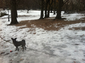 Photo: Malia playng in Central Park in New York during a winter trip